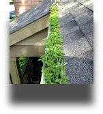 quad cities gutter cleaning, insured and bonded,safe and reliable.